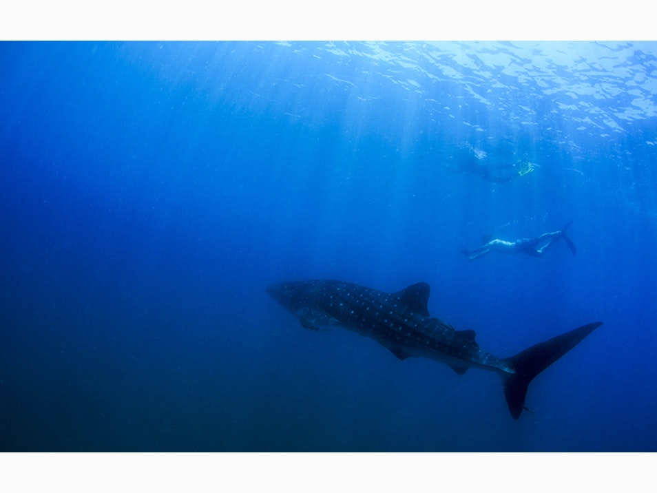 Swim with Dolphins and Whale Sharks