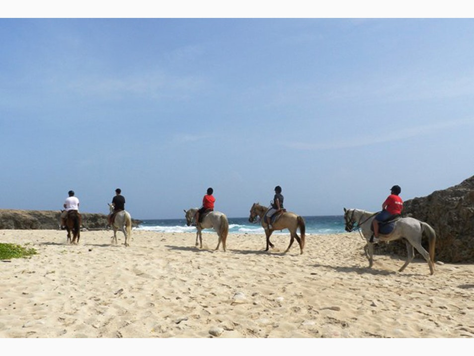 Explore Aruba on Horseback