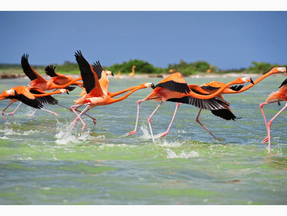 The Flamingos of Celestún