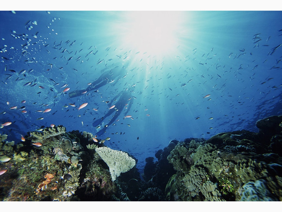 Preserving the Reef