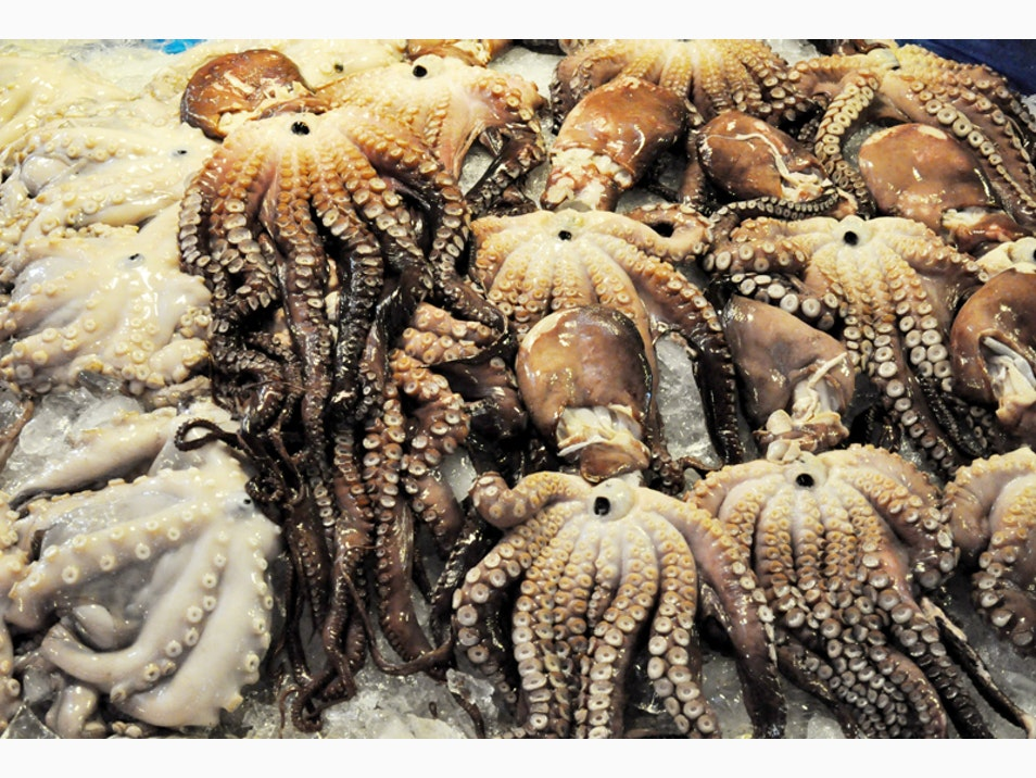 Live Octopus, a Korean Delicacy