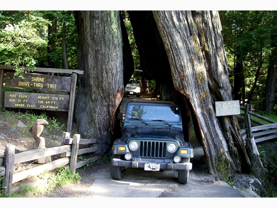 The Redwoods by Car