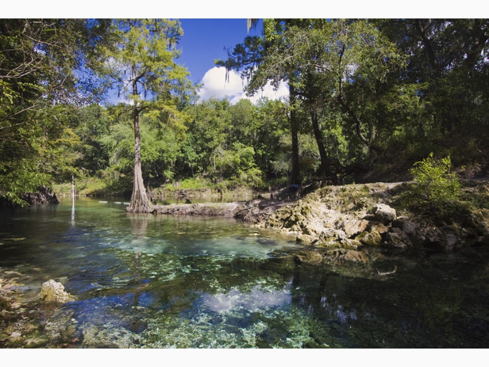 Swimming and Tubing in Freshwater Springs