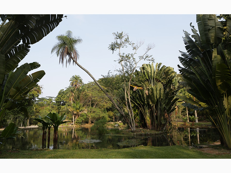 Commune with Nature in Rio