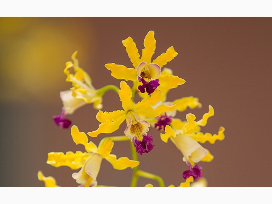 Discover Endemic Orchids